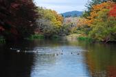 2014-10-21 東京 Day 4 輕井澤:11 雲場池-03.JPG