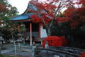 2013-11-29 關西賞楓  Day 4 清水寺:01 清水寺-21.JPG