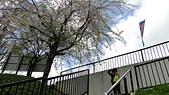 2015-04-14 京都八日遊 Day 4 天橋立、伊根:DSC04815.JPG
