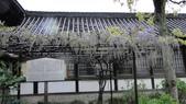 2015-04-13 京都八日遊 Day 3 六孫王神社、金閣寺、仁和寺、原谷苑:02 六孫王神社-16.JPG