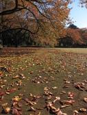 2012-11-25 東京自由行 Day4 -- 新宿御苑:08 新宿御苑.JPG