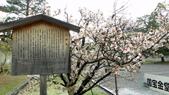 2015-04-13 京都八日遊 Day 3 六孫王神社、金閣寺、仁和寺、原谷苑:04 仁和寺-07.JPG
