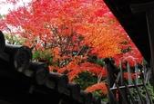 2013-11-28 關西賞楓 Day 3 東福寺:04 往東福寺路上-04.jpg
