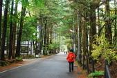 2014-10-21 東京 Day 4 輕井澤:10 往雲場池-11.JPG
