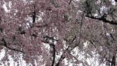 2015-04-13 京都八日遊 Day 3 六孫王神社、金閣寺、仁和寺、原谷苑:05 原谷苑-08.JPG