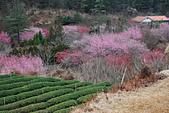 2014-02-15 武陵農場露營、合歡山賞雪:10武陵農場-27.JPG