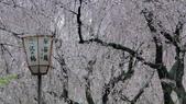 2015-04-13 京都八日遊 Day 3 六孫王神社、金閣寺、仁和寺、原谷苑:05 原谷苑-18.JPG