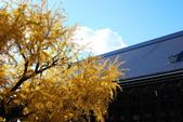 2013-11-29 關西賞楓  Day 4 西本願寺:04 西本願寺-06.JPG