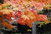 2013-11-28 關西賞楓 Day 3 東福寺:04 往東福寺路上-06.JPG