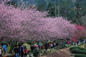 2014-02-15 武陵農場露營、合歡山賞雪:10武陵農場-28.JPG