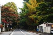 2014-10-21 東京 Day 4 輕井澤:10 往雲場池-05.JPG