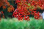 2014-10-21 東京 Day 4 輕井澤:11 雲場池-08.JPG