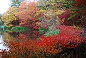 2014-10-21 東京 Day 4 輕井澤:11 雲場池-09.JPG