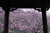 2014-02-15 武陵農場露營、合歡山賞雪:10武陵農場-29.JPG