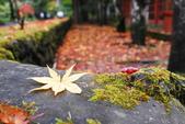 2014-10-21 東京 Day 4 輕井澤:10 往雲場池-22.JPG