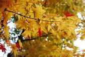 2014-10-21 東京 Day 4 輕井澤:05 輕井澤-14.JPG