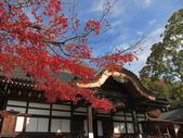 2012-11-24 東京自由行 Day3 -- 深大寺:19 深大寺.JPG