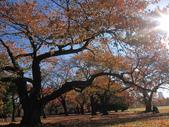 2012-11-25 東京自由行 Day4 -- 新宿御苑:11 新宿御苑.JPG
