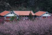 2014-02-15 武陵農場露營、合歡山賞雪:10武陵農場-30.JPG