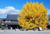 2013-11-29 關西賞楓  Day 4 西本願寺:04 西本願寺-08.JPG