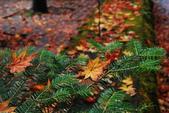 2014-10-21 東京 Day 4 輕井澤:10 往雲場池-20.JPG