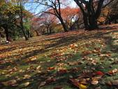2012-11-25 東京自由行 Day4 -- 新宿御苑:12 新宿御苑.JPG