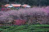2014-02-15 武陵農場露營、合歡山賞雪:10武陵農場-31.JPG