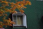 2014-10-21 東京 Day 4 輕井澤:10 往雲場池-03.JPG