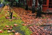 2014-10-21 東京 Day 4 輕井澤:10 往雲場池-24.JPG