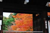 2013-11-28 關西賞楓 Day 3 東福寺:04 往東福寺路上-09.JPG