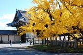 2013-11-29 關西賞楓  Day 4 西本願寺:04 西本願寺-09.JPG