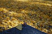 2013-11-30 關西賞楓 Day 5 大阪:04 大阪城公園-10.JPG