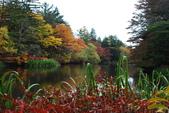 2014-10-21 東京 Day 4 輕井澤:11 雲場池-16.JPG