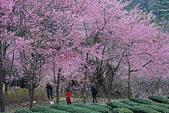 2014-02-15 武陵農場露營、合歡山賞雪:10武陵農場-32.JPG