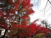 2012-11-24 東京自由行 Day3 -- 深大寺:07 深大寺.JPG