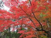 2012-11-24 東京自由行 Day3 -- 深大寺:04 深大寺.JPG