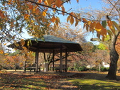 2012-11-25 東京自由行 Day4 -- 新宿御苑:14 新宿御苑.JPG