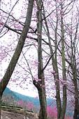 2014-02-15 武陵農場露營、合歡山賞雪:10武陵農場-33.JPG