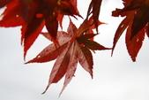 2014-10-21 東京 Day 4 輕井澤:05 輕井澤-15.JPG