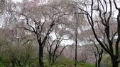 2015-04-13 京都八日遊 Day 3 六孫王神社、金閣寺、仁和寺、原谷苑:05 原谷苑-11.JPG