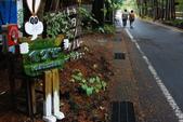 2014-10-21 東京 Day 4 輕井澤:10 往雲場池-14.JPG