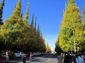 2012-11-25 東京自由行 Day 4 -- 銀杏並木、表參道、明治神宫:01 銀杏並木.JPG