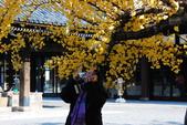 2013-11-29 關西賞楓  Day 4 西本願寺:04 西本願寺-13.JPG