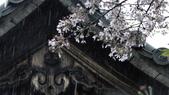 2015-04-13 京都八日遊 Day 3 六孫王神社、金閣寺、仁和寺、原谷苑:02 六孫王神社-11.JPG