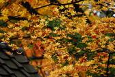 2014-10-21 東京 Day 4 輕井澤:10 往雲場池-19.JPG