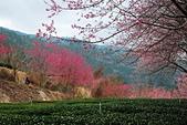 2014-02-15 武陵農場露營、合歡山賞雪:10武陵農場-34.JPG
