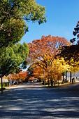 2013-11-30 關西賞楓 Day 5 大阪:04 大阪城公園-02.JPG