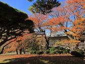 2012-11-25 東京自由行 Day4 -- 新宿御苑:16 新宿御苑.JPG