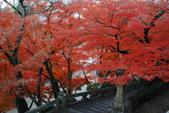 2013-11-29 關西賞楓  Day 4 清水寺:01 清水寺-13.JPG