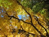 2012-11-25 東京自由行 Day 4 -- 銀杏並木、表參道、明治神宫:02 銀杏並木.JPG